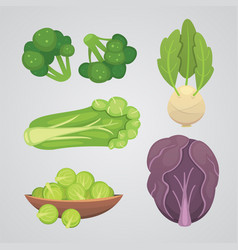 Set cabbage and lettuce vegetable green vector