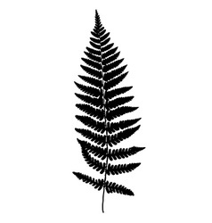 Fern frond black silhouette Forest concept vector image vector image