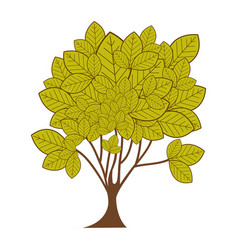 Green leafy tree plant with ramifications vector