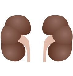 Kidneys vector