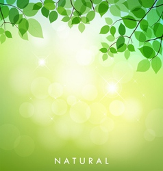 Green leaf natural background vector image