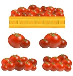 Set of fresh red tomatoes vector
