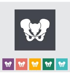 pelvis vector image