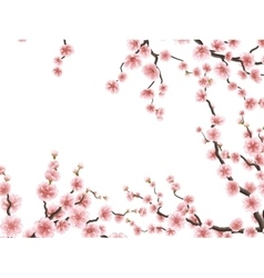 Sakura blossoms background eps 10 vector