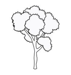 Tree plant leafy forest wood outline vector