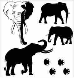 elephant silhouetted vector image vector image