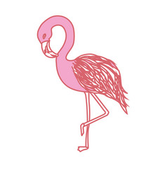 Beauty and exotic flamingo bird animal vector