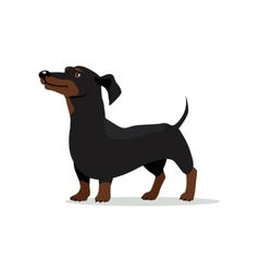 Dachshund dog flat design vector