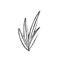 Leaves plant nature foliage botanical image sketch vector