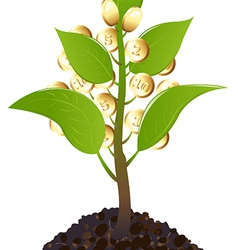 Green young plant with money vector