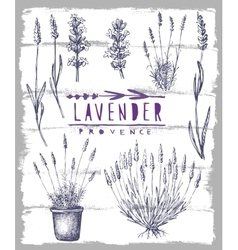 Lavender set vector