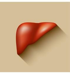 Semi-realistic human liver vector