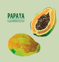 Digital detailed color papaya hand drawn vector