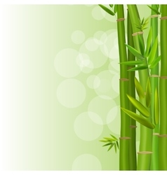 Colorful stems and bamboo leaves background vector