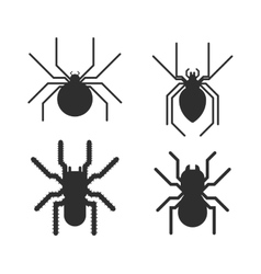 Poisonous spiders vector