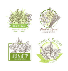 hand drawn herbs and spice vector image vector image