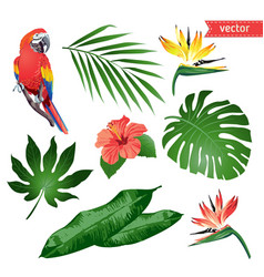 Set of tropical flowers leaves and bird vector