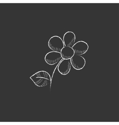 Flower drawn in chalk icon vector