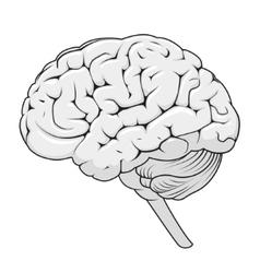 Stucture of human brain schematic vector image vector image