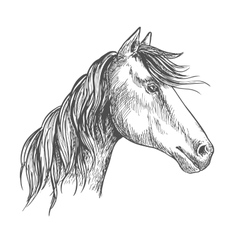 Horse with mane mustang stallion sketch portrait vector