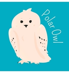 Polar owl isolated vector