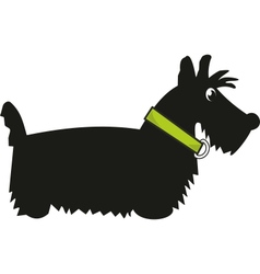 puppy scotch terrier vector image