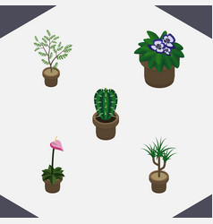 Isometric plant set of flowerpot peyote vector