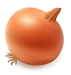 onion 001 vector image vector image
