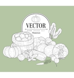 Vegetables Collection Vintage Sketch vector image