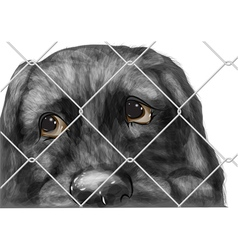 adopt animal vector image vector image