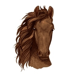 Arabian brown stallion portrait vector image