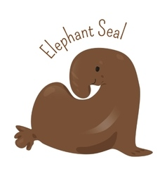 Elephant seal isolated on white vector