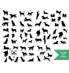 The big set of dog breeds silhouettes vector image