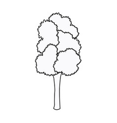 Tree woody foliage bark stem outline vector