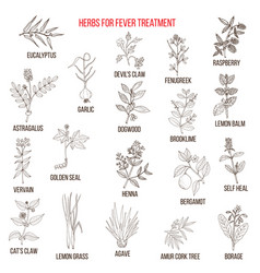 Best herbal remedies for fever vector