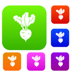 Fresh beetroot set collection vector