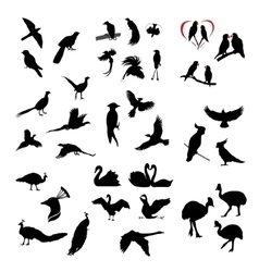 The big set of wild birds silhouettes vector