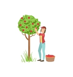 Woman picking up apples from tree vector