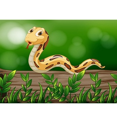 A snake above a wood vector
