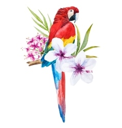 Watercolor parrot vector