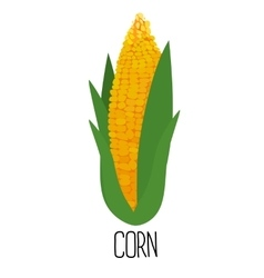 Corn cob isolated on white background vector image