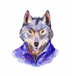 Hipster wolf in purple shirt portrait of wild vector