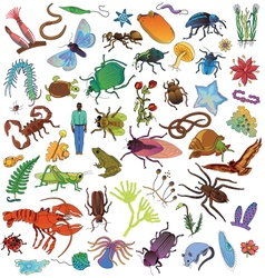 Invertebrates vector image
