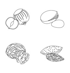 Hazelnut pistachios walnut almondsdifferent vector