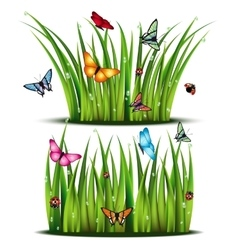 Insects and fragment of the grass vector image vector image