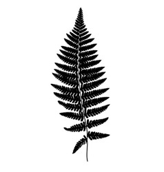 Fern frond black silhouette forest concept vector