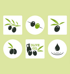 Black and green olives with oil olive vector