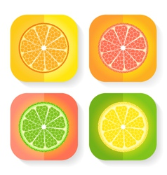 Citrus fruit icons vector