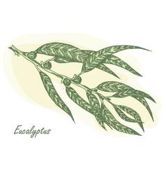 eucalyptus leaves vector image vector image