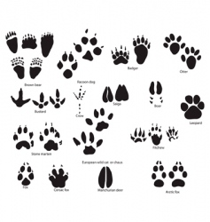 animal trails prints vector image vector image